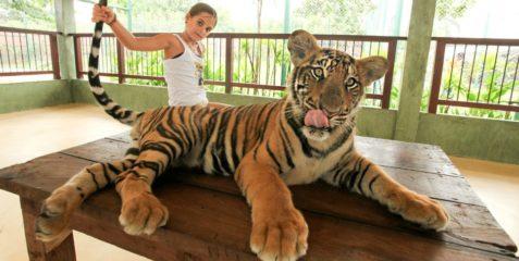 Королевство Тигров
